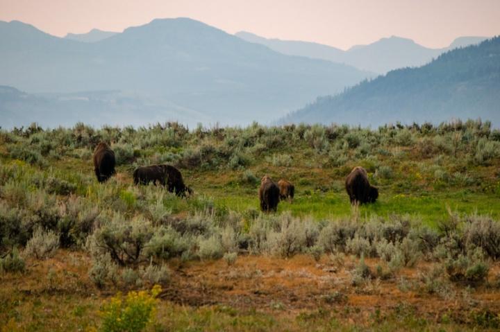 A Packed 3-Day YellowstoneItinerary